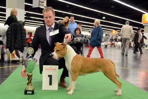 American Staffordshire Terrier Parastone'S Designed With Love (Lilli) - Nürnberg'13