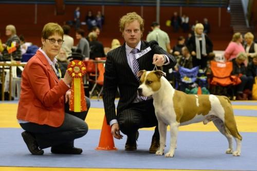 American Staffordshire Terrier Parastone'S Jimmy Junior (J.J.) - Växjö'13