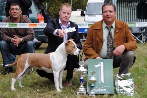 American Staffordshire Terrier Parastone'S Being A Jetsetter (Djennie) - Volksmarsen'12
