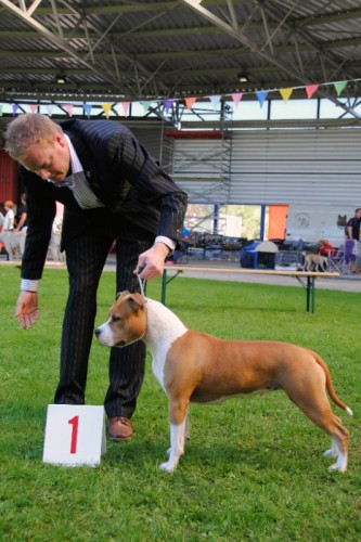 American Staffordshire Terrier Parastone'S Designed With Love (Lilly) - Alkmaar'12