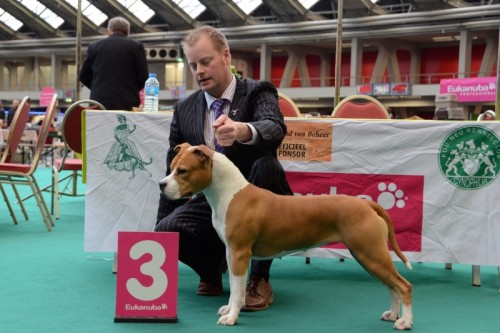 American Staffordshire Terrier Parastone'S Designed With Love (Lilly) - Amsterdam'12
