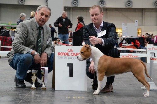 American Staffordshire Terrier Parastone'S Designed With Love (Lilly) - Hannover'12