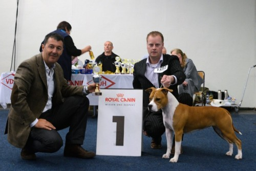 American Staffordshire Terrier Parastone'S Designed With Love (Lilly) - Internationale Dortmund '12