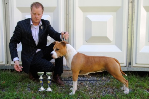 American Staffordshire Terrier Parastone'S Designed With Love (Lilly) - Krefeld'12
