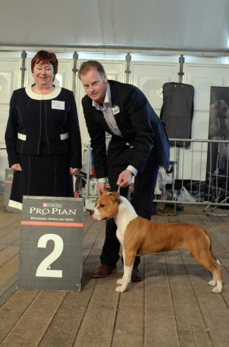 American Staffordshire Terrier Parastone'S Designed With Love (Lilly) - Zwolle'12