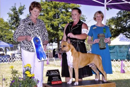 American Staffordshire Terrier Parastone'S Call Me Mon Cheri (Brady) - Mensona Kennel Club 2'11