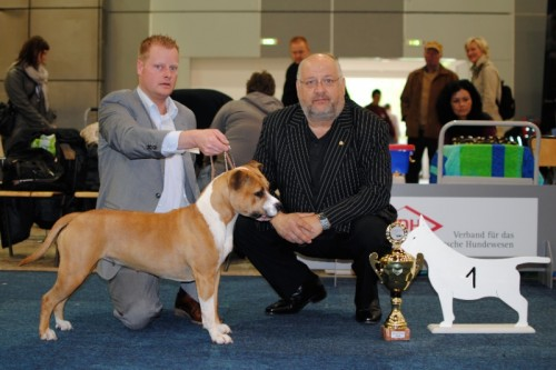 American Staffordshire Terrier Parastone'S Because Its Me (Chili) - Dortmund Nationale'10