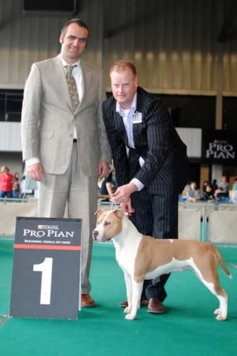 American Staffordshire Terrier Parastone'S Being A Jetsetter (Djennie) - Rotterdam'11