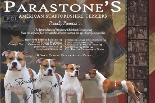 American Staffordshire Terrier Parastone'S Jimmy Junior (J.J.) - #1 AmStaff 2009