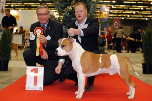 American Staffordshire Terrier Parastone'S Jimmy Junior (J.J.) - Brussel'10
