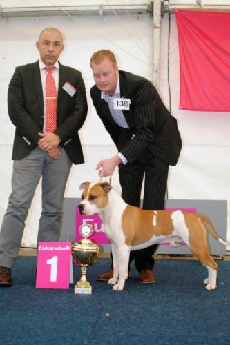 American Staffordshire Terrier Parastone'S Jimmy Junior (J.J.) - Bundessieger'11