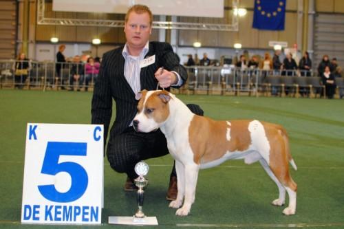 American Staffordshire Terrier Parastone'S Jimmy Junior (J.J.) - Eindhoven'11