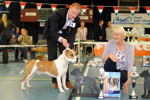 American Staffordshire Terrier Parastone'S Jimmy Junior (J.J.) - Euro Specialty'11