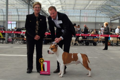 American Staffordshire Terrier Parastone'S Jimmy Junior (J.J.) - Hazerswoude'11