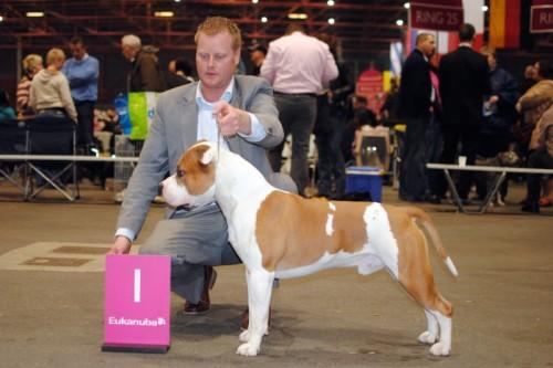 American Staffordshire Terrier Parastone'S Jimmy Junior (J.J.) - Leeuwarden'10