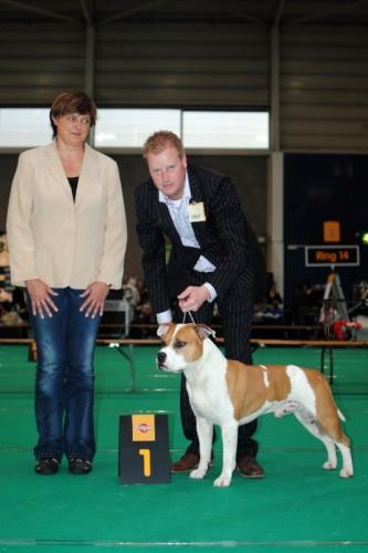 American Staffordshire Terrier Parastone'S Jimmy Junior (J.J.) - Maastricht'11