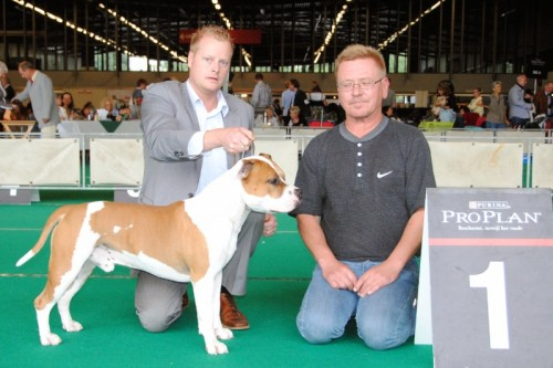 American Staffordshire Terrier Parastone'S Jimmy Junior (J.J.) - Rotterdam'10