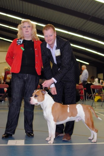 American Staffordshire Terrier Parastone'S Jimmy Junior (J.J.) - Wijchen Terriers'11
