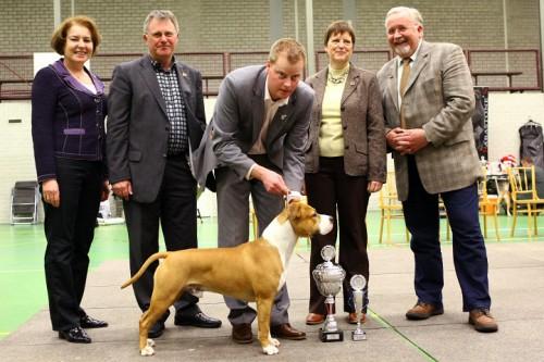 American Staffordshire Terrier Parastone'S Dollar Bill (Jay) - JHD ASTCH'10