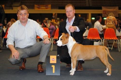 American Staffordshire Terrier Parastone'S Bullit Girl (Sue) - Arnhem'11