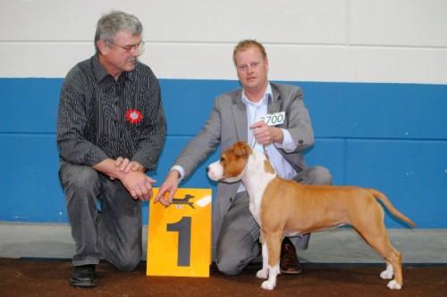 American Staffordshire Terrier Parastone'S Bullit Girl (Sue) - Luxemburg'10