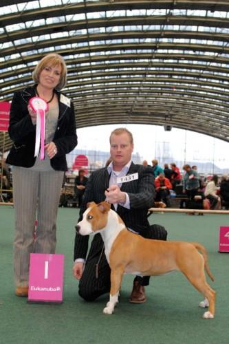 American Staffordshire Terrier Parastone'S Bullit Girl (Sue) - Winner Show'10