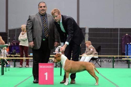 American Staffordshire Terrier Parastone'S Hello Dolly (Stella) - Maastricht'14