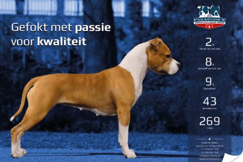 American Staffordshire Terrier Parastone'S 2014 advertentie