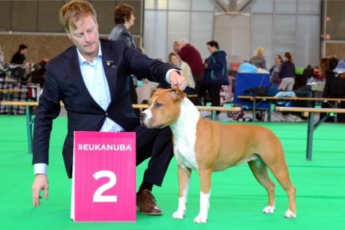 American Staffordshire Terrier Parastone'S Hello Dolly (Stella) - Amsterdam Winner'14