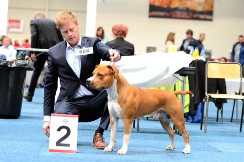 American Staffordshire Terrier Parastone'S Easy Does It (Easy) - Dortmund'15