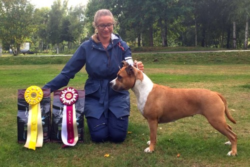 American Staffordshire Terrier Parastone'S Because Its Me (Chili) - Öland'15