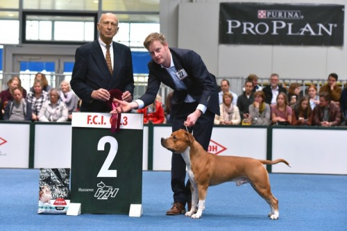 American Staffordshire Terrier Parastone'S Easy Does It (Easy) - Hannover'15