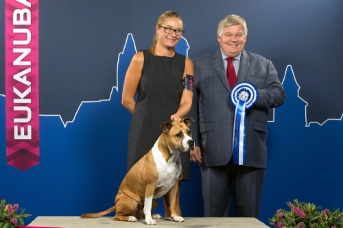 American Staffordshire Terrier Parastone'S Because Its Me (Chili) - Maastricht'16
