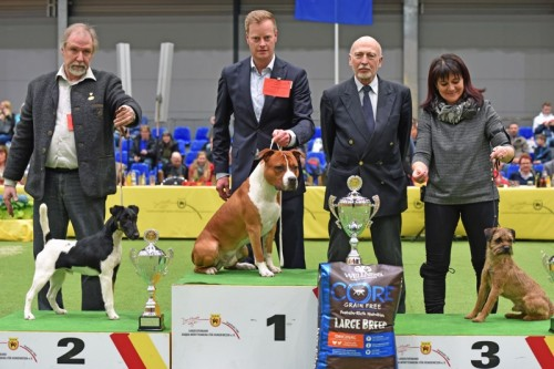 American Staffordshire Terrier Parastone'S Not For Sale (Jackson) - Offenburg'18