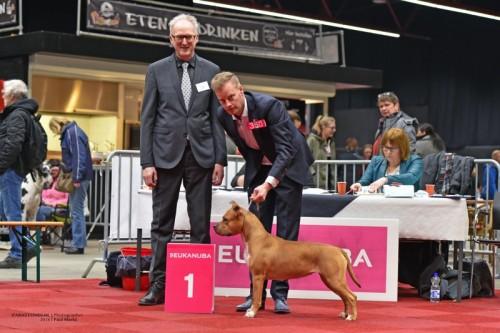 American Staffordshire Terrier Parastone'S Hot Like Lava (Jessie) - Groningen'18