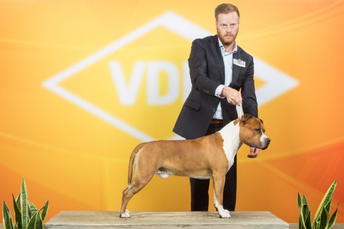 American Staffordshire Terrier Parastone'S Not For Sale (Jackson) - Dortmund'18