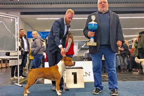 American Staffordshire Terrier Parastone'S Not For Sale (Jackson) - Bundessieger'18