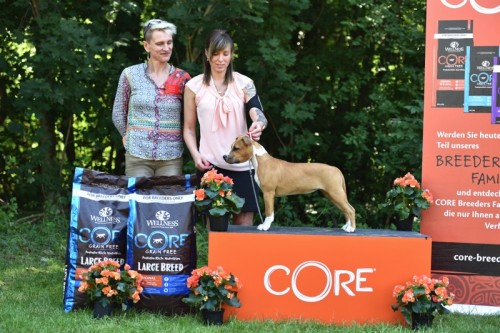 American Staffordshire Terrier Parastone'S Blah Blah Blah (Pepsi) - Meisdorf'19