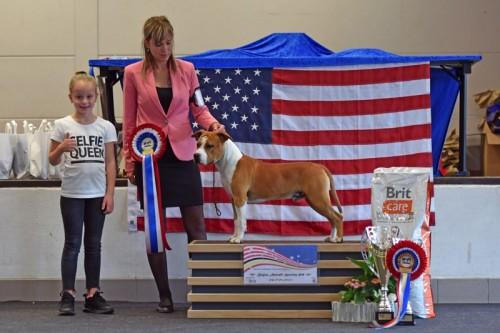 American Staffordshire Terrier Parastone'S What Happens In Vegas (Vegas) - Winkelse Delle'19