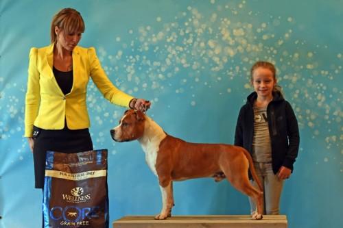 American Staffordshire Terrier Parastone'S What Happens In Vegas (Vegas) - Tiel'19