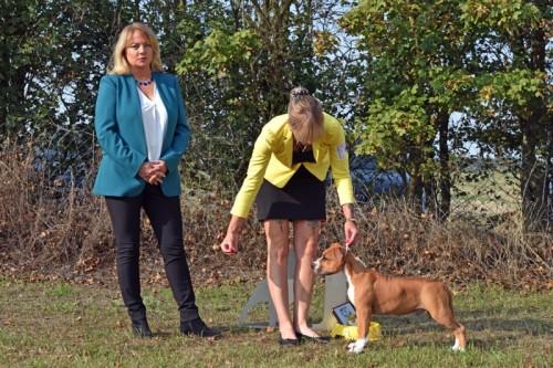 American Staffordshire Terrier Parastone'S Release The Joker (Joker) - Bennewitz'20
